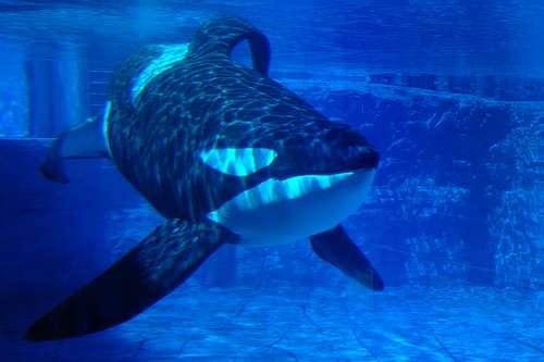 """noticias demanda de cinco orcas por """"esclavitud"""""""